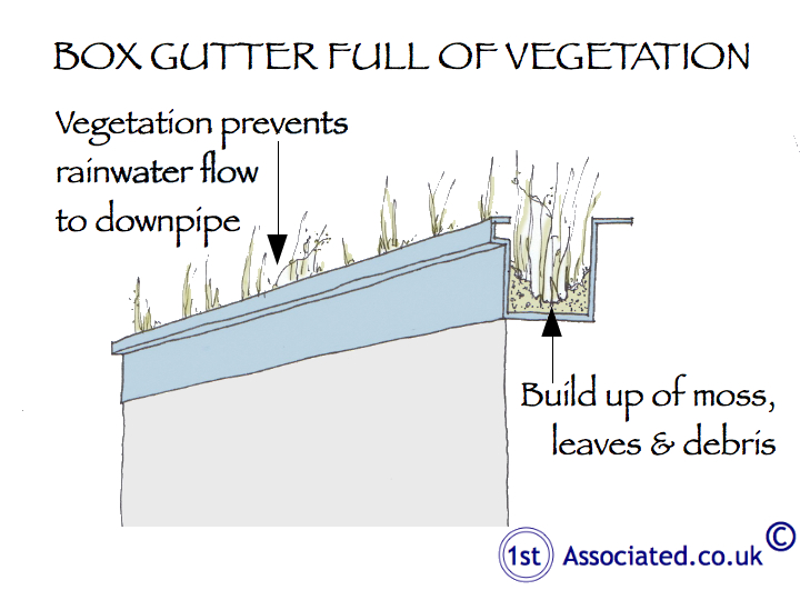 Box gutter full of vegetation